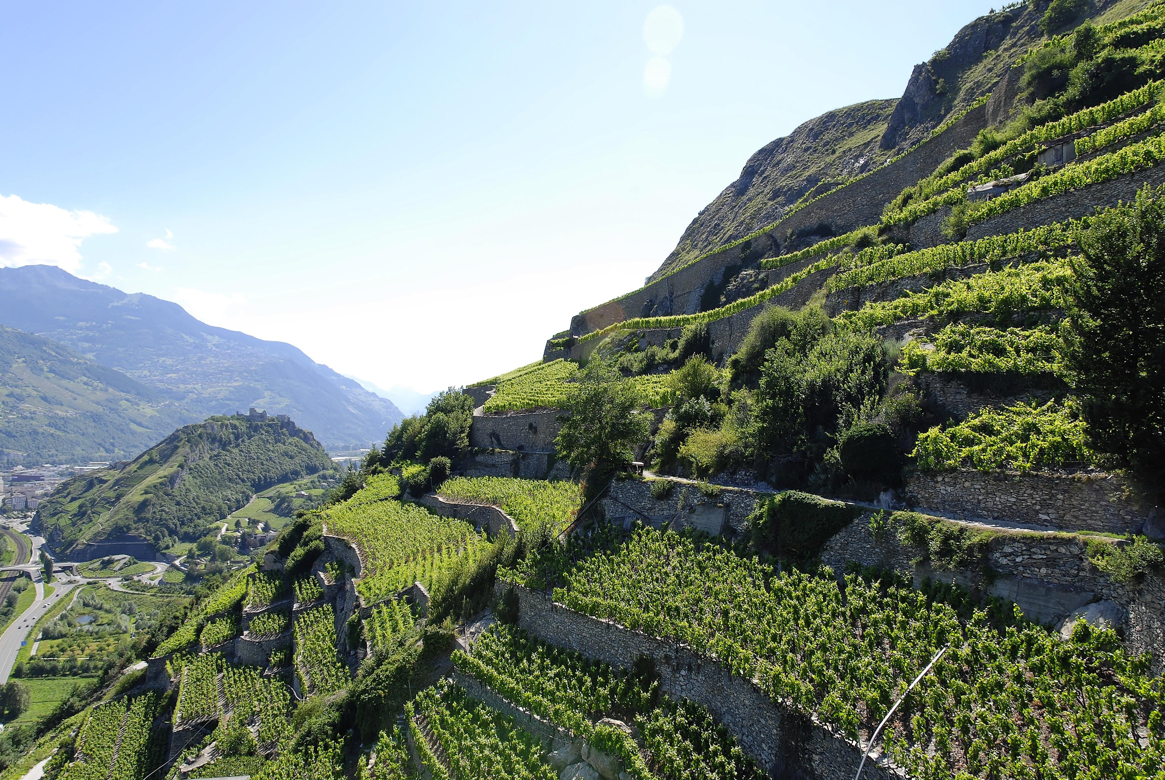 Ladera Vineyards Tour
